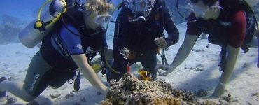 diving in Tauchschule Hurghada