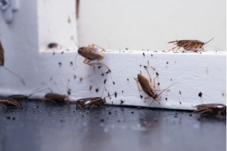 pests away from your house
