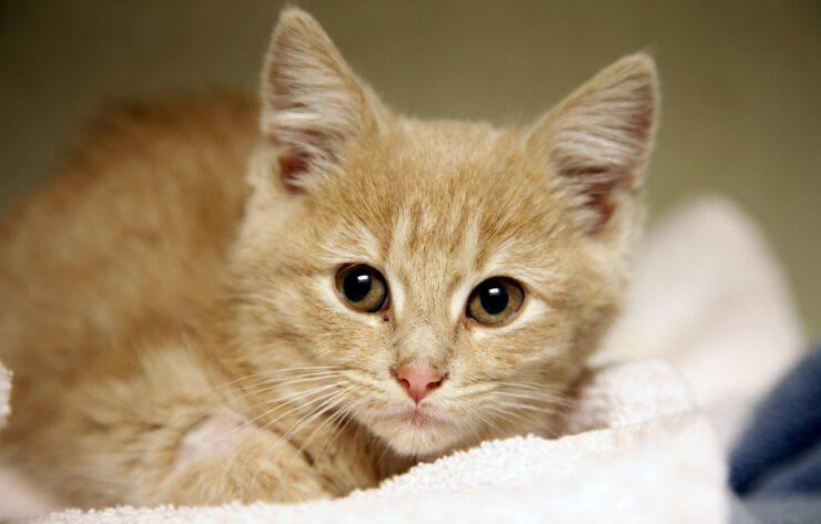 Understanding Cat Care