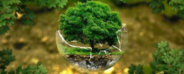 Top 7 Benefits of Positive Environmental